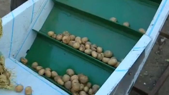 土豆输送带行业应用视频